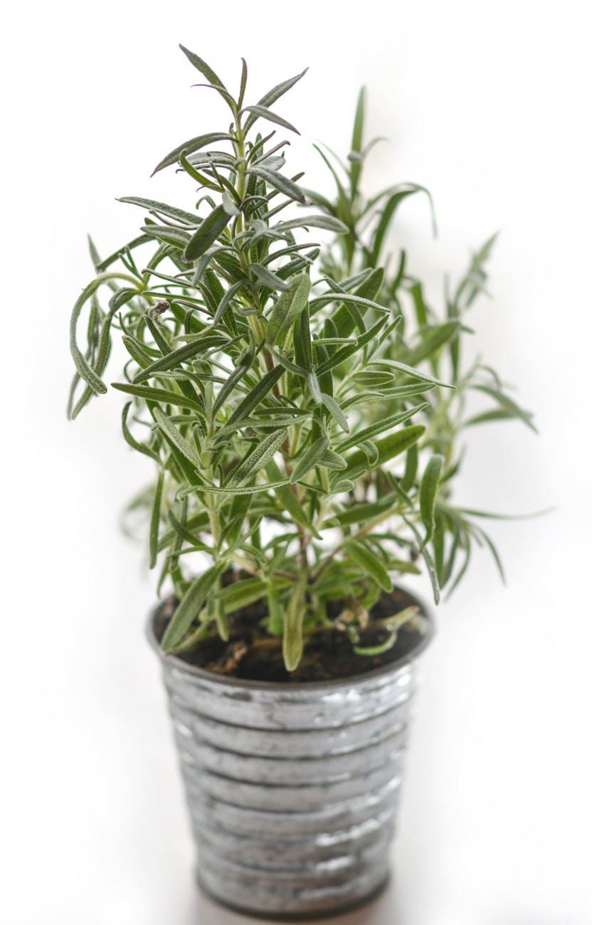 plant blur leaves green